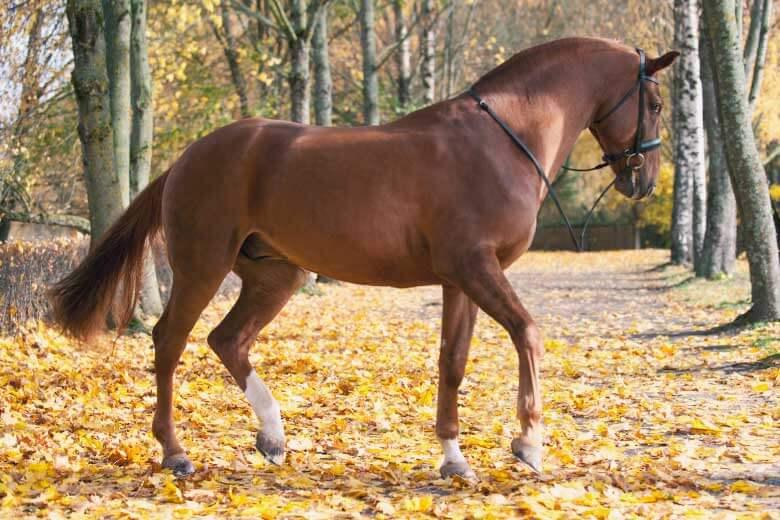 Pferdefotografie Licht
